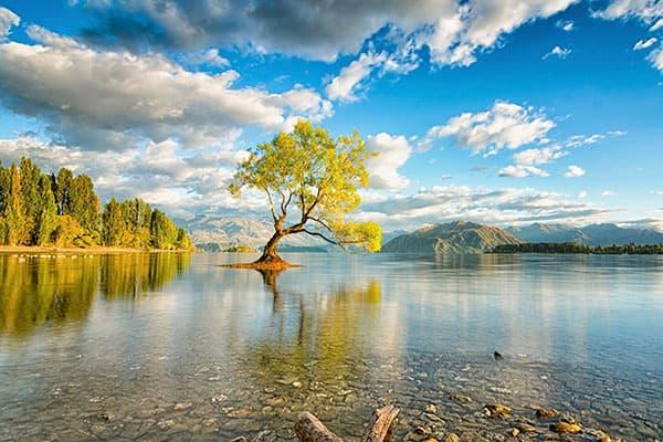 Дерево посреди озера